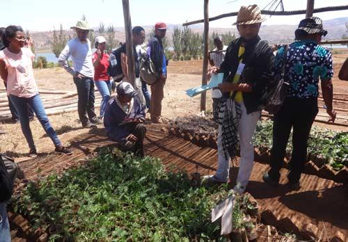 Une multitude de plantes avec différentes vertues utilisables pour leur propriétés médicinales ou pour les luttes intégrés ...