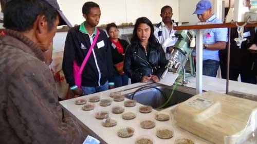 Le FIFAMANOR produit des semences améliorés entre autre pour le fourrage du bétail, la pomme de terre et la patate douce, ses domaines d'excellence.